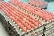 Vânzările de ouă în scădere cu 30%!
