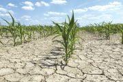 Toţi fermierii afectaţi de secetă vor primi despăgubiri!
