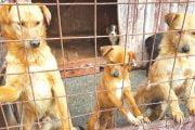 5 tone de hrană pentru câinii fără adăpost de la Racoviţa
