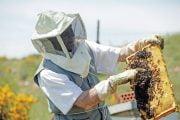 85 milioane de euro investiți în sectorul apicol