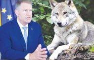 Iohannis şi lupul