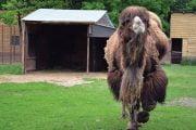 Puteţi vizita Grădina Zoologică Piteşti!