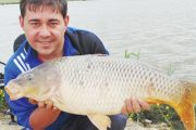 Porumbul în pescuitul staționar