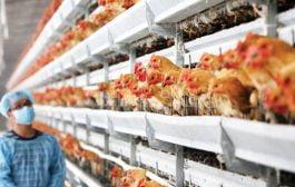 Măsuri pentru prevenirea gripei aviare