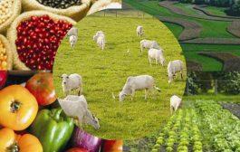 Cei mai mulți angajați,  în sectorul alimentar!