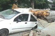 Un copac rupt a distrus 3 maşini