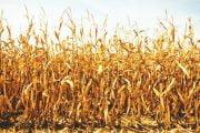 Seceta a afectat 1,3 milioane de hectare