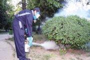 Se fac stropiri împotriva dăunătorilor plantelor