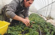 Fermierii au primit 434 milioane euro