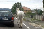A legat calul de mașină!