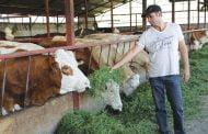 Fermierii afectați de criza COVID-19 vor primi despăgubiri