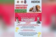 Campanie gratuită de sterilizare a câinilor și pisicilor