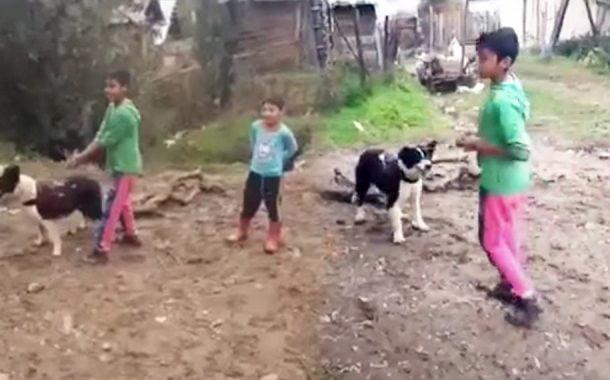 Distrat, de schigiuirea animalelor!