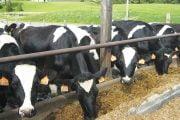 Fermierii primesc de la stat 65 milioane lei