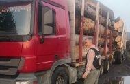Camion cu lemne confiscat de polițiști!