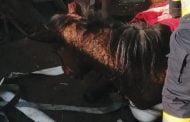Cal salvat de pompieri dintr-un şanţ