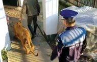Leul lui Dani Mocanu găsit în Dâmboviţa