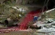 Poluare cu sânge în Pârâul Bascov