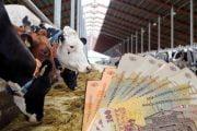 Crescătorii de animale își primesc banii de la APIA
