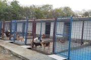 Spaţii mai mari pentru câinii de la adăpostul din Mioveni