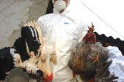Medicii veterinari instruiţi în prevenirea gripei aviare