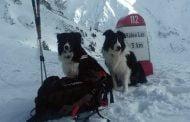 Stagiu pentru unităţi canine de salvare montană