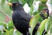 1 Aprilie – Ziua Păsărilor