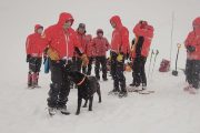 Câinii de avalanşă au dat examen în Făgăraş