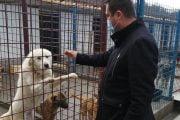 Cei 600 de câini fără stăpân de la Mioveni, vor avea condiţii mai bune