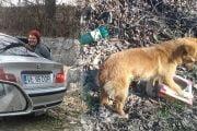 Amendată cu 1000 de lei pentru abandon de câini!
