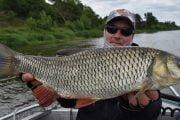 Pescuitul cleanului la spinning