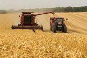 Grânarul Europei importă grâu şi porumb!