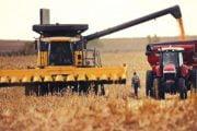 A scăzut producţia de cereale!