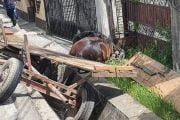 Cal mort în condiţii suspecte, în Turceşti!