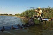 Pescuitul crapului la pellet feeder