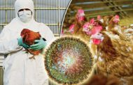 A apărut gripa aviară!
