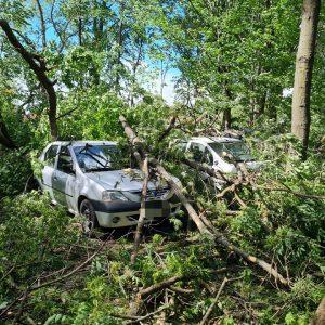 4 maşini avariate de un copac ce a fost rupt de vânt!