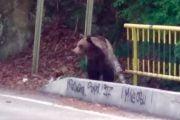 Amendată că hrănea ursul!