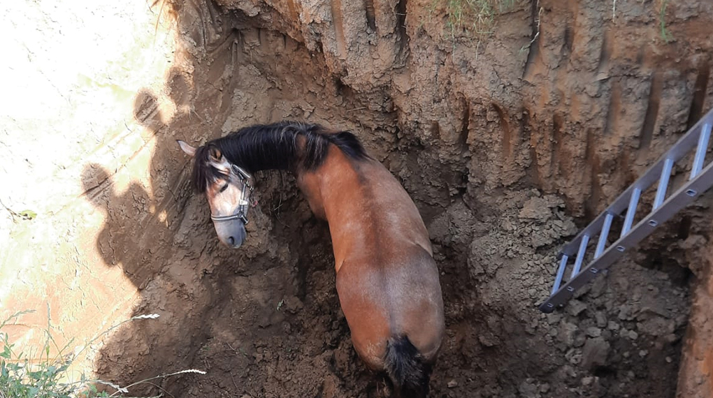 Pompierii au salvat un cal căzut într-o groapă!
