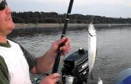 Pescuitul la scrumbie