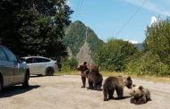Turist amendat că hrănea urși!