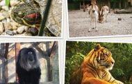 Intrare gratuită la Zoo Pitești, luni